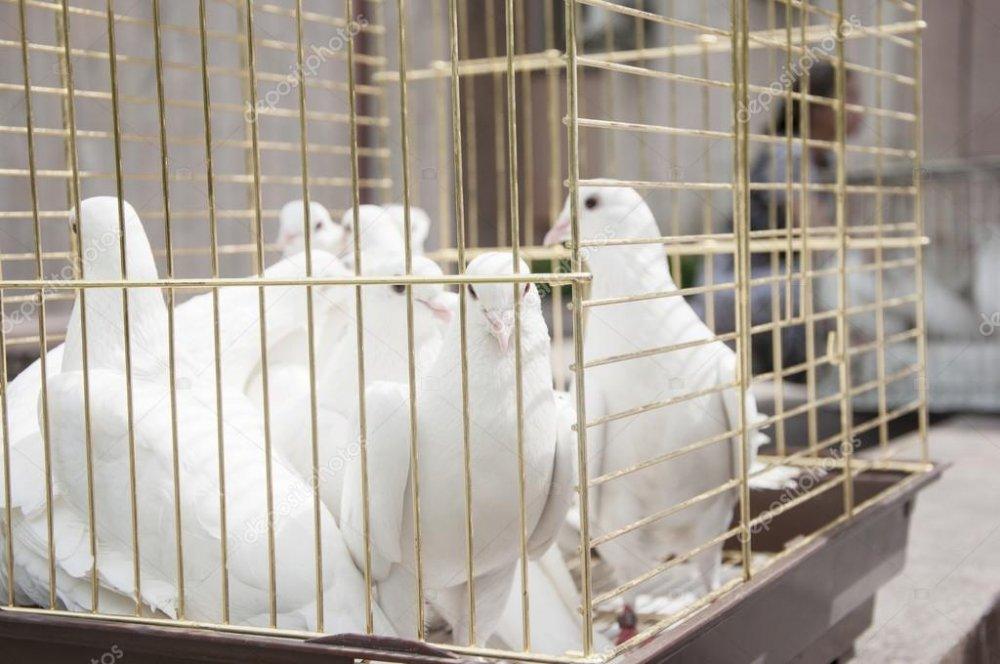 Produse columbofile pentru iubitorii de porumbei