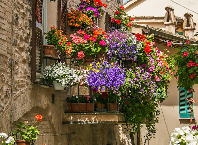 Alege Alege ghivecele de flori asortate cromatic – Sere Flori Mihaiesti te ajuta – Sere Flori Mihaiesti te ajuta